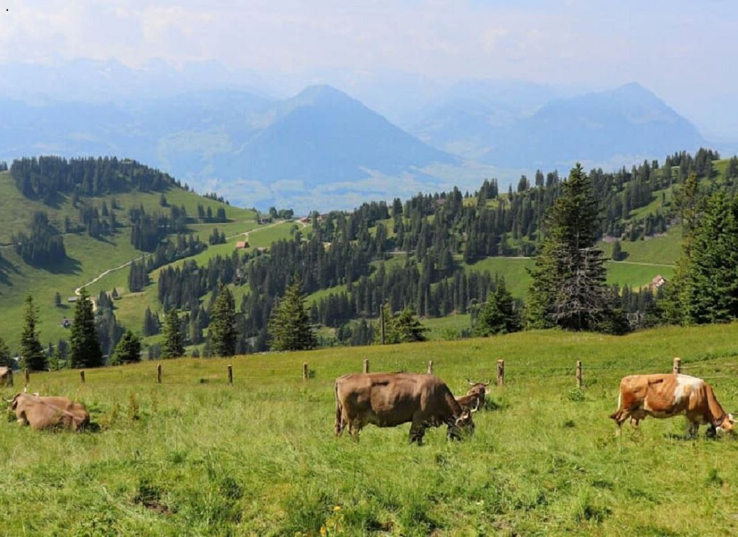 Lessons From Swiss Dairy Farmers in the Alps