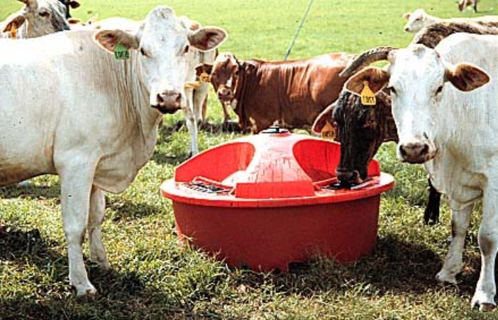 Liquid Feeds for Winter Cattle Supplementation - AgWeb