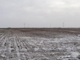 winter wheat ND 021014