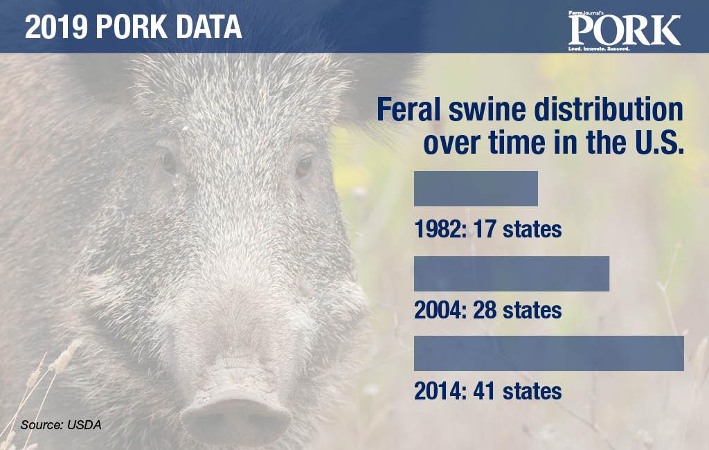 feral swine graphic
