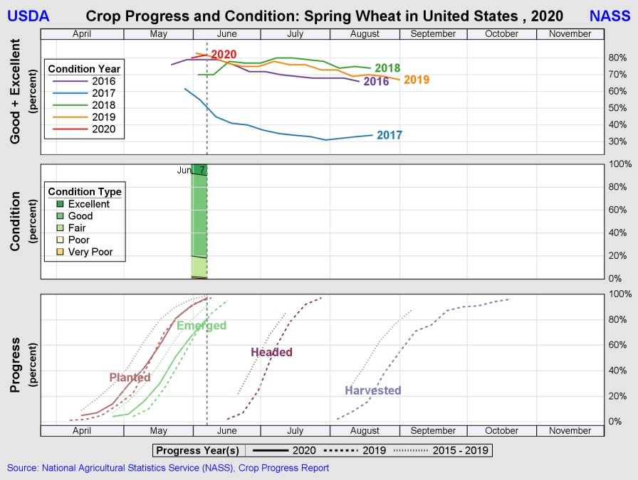 spring wheat progress