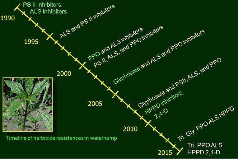 Graph Waterhemp 2