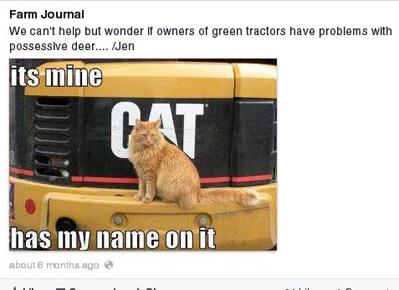 6 Facebook Cat