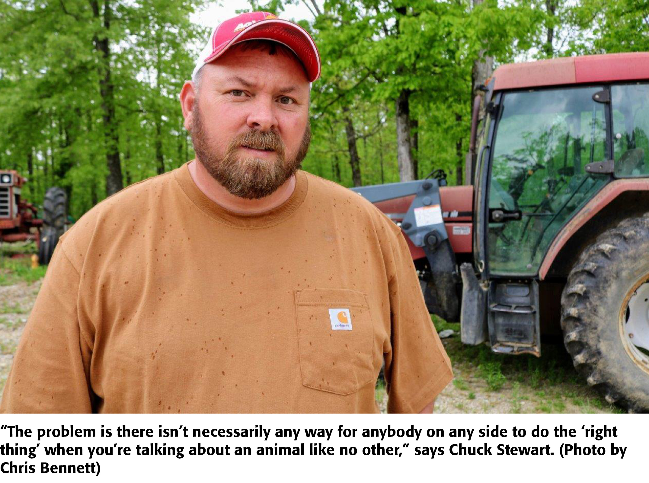 Wild Pig Wars: Controversy Over Hunting, Trapping in Missouri   Drovers