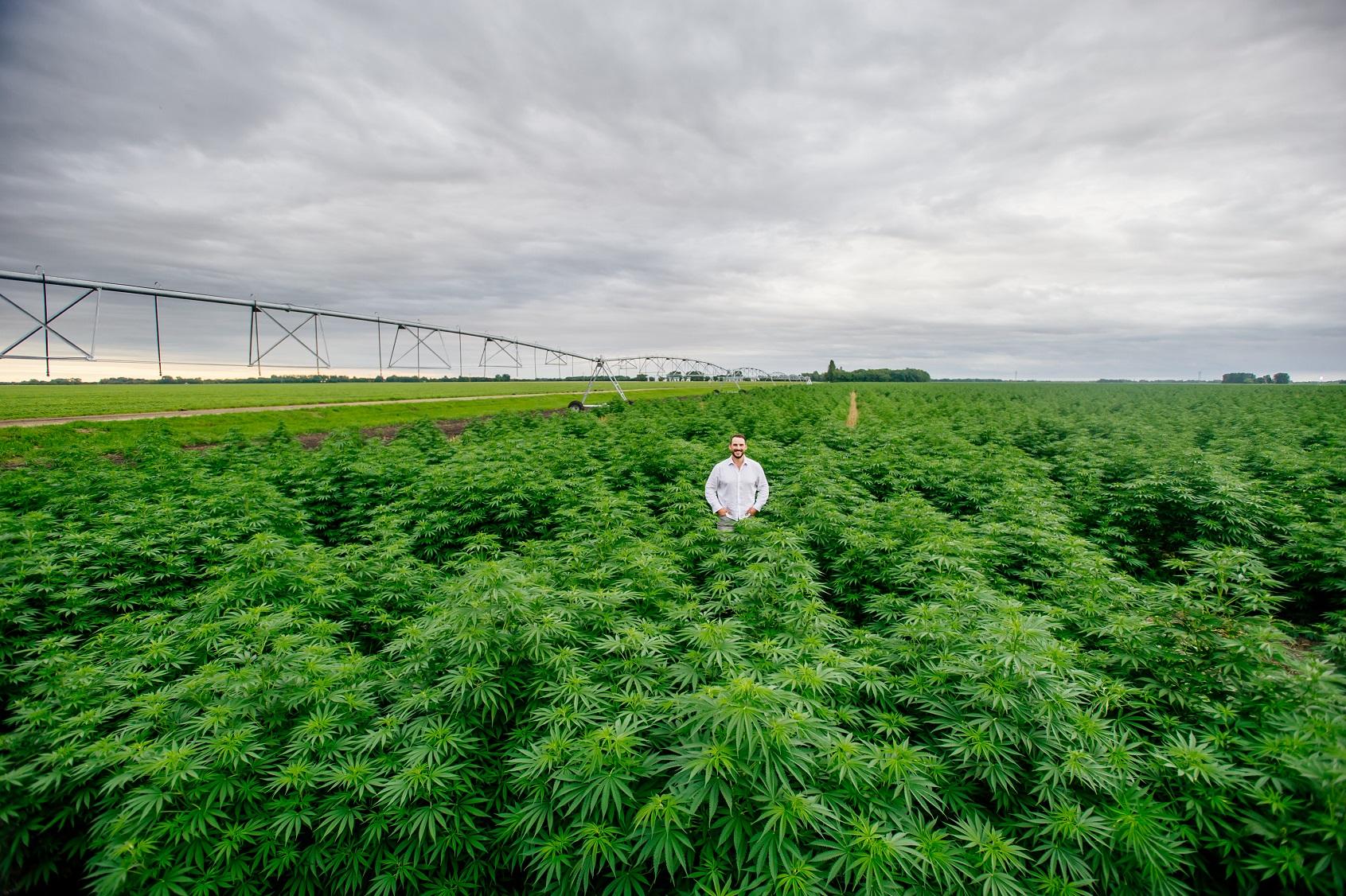 Chris Adams in hemp field