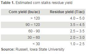 Corn_Stalks