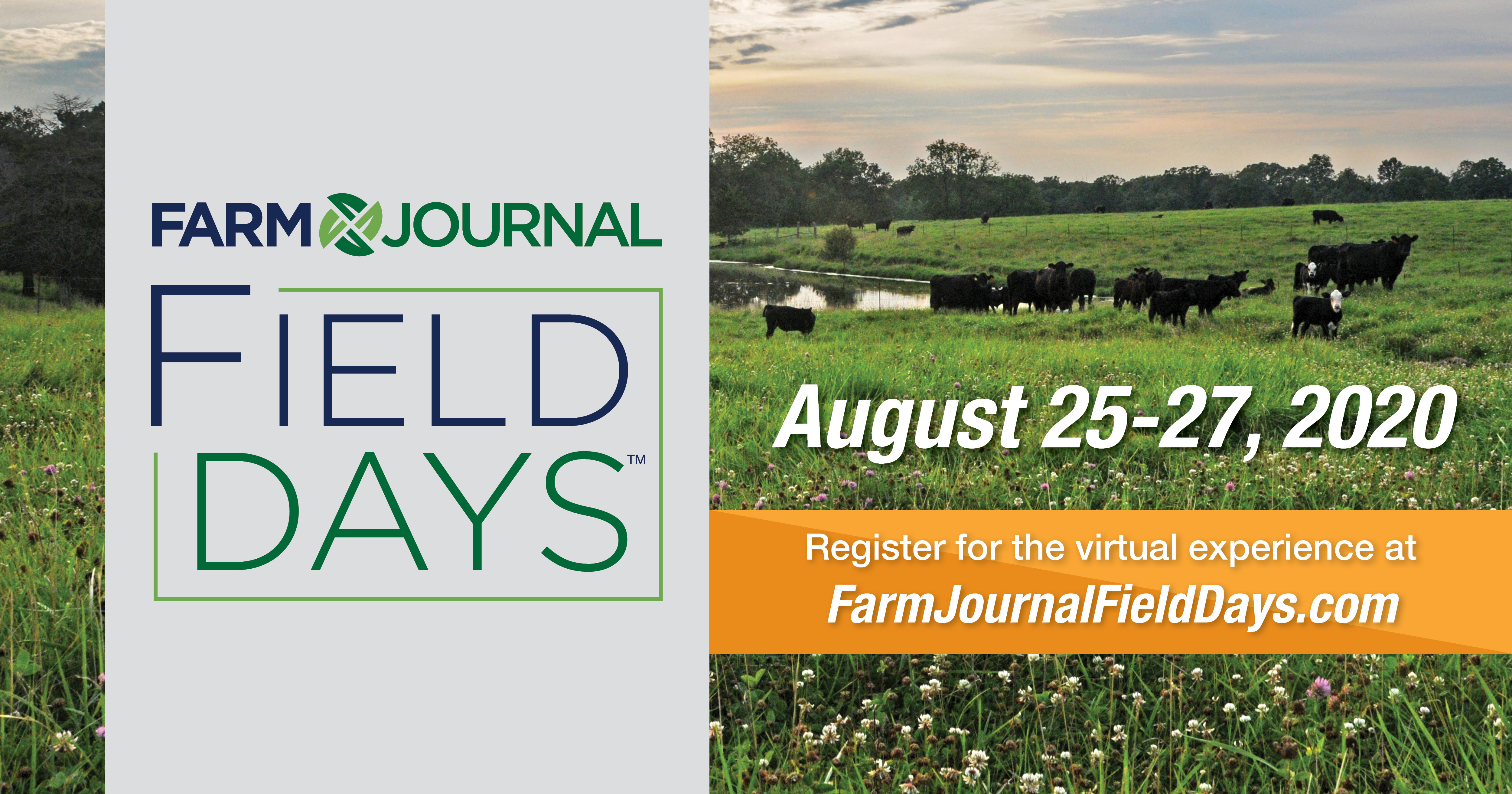 Field Days Promo
