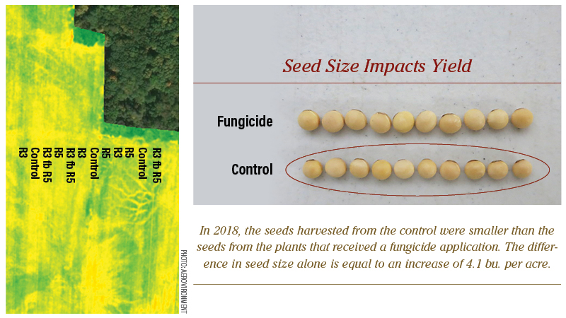 Seed Size Impacts Yield
