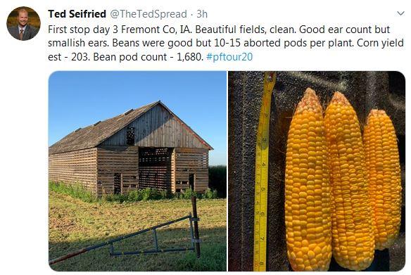 Pro Farmer Crop Tour Corn Iowa
