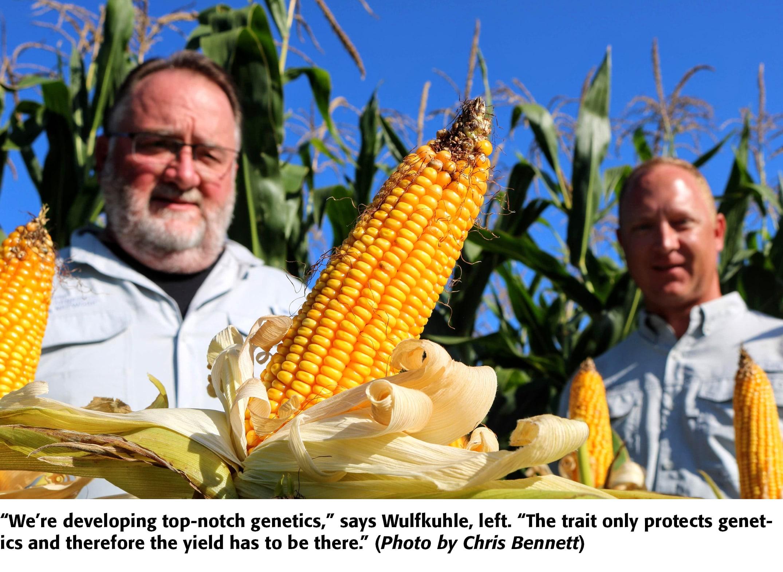 First-Ever Generic Bt Corn Nears Farmland | Greenbook