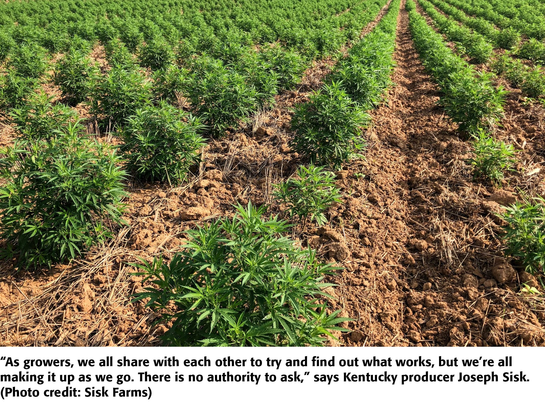 How To Grow Hemp For Cbd Seed Or Fiber Agweb