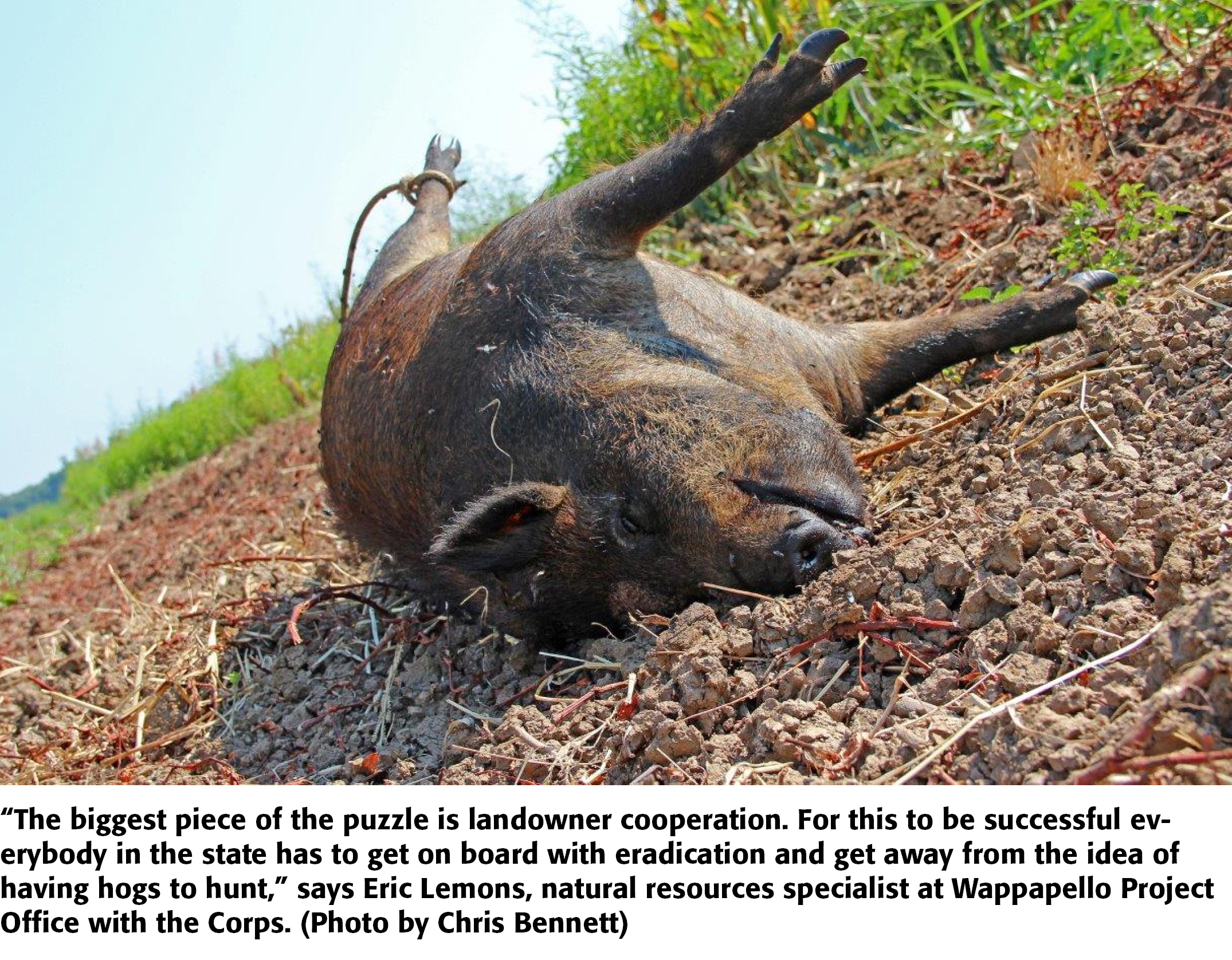 Wild Pig Wars: Controversy Over Hunting, Trapping in