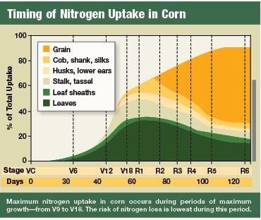 N uptake in corn
