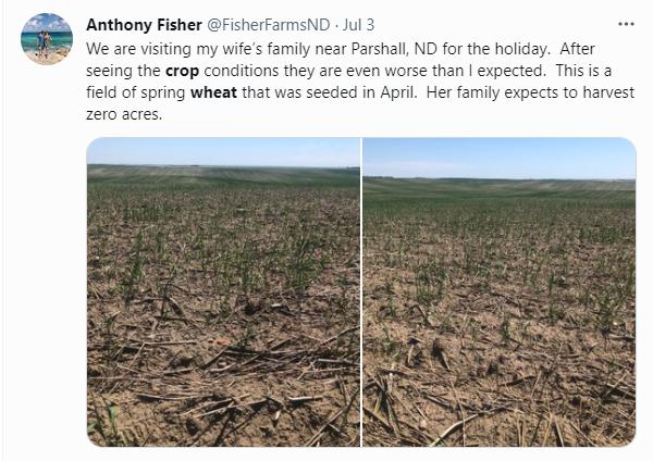 Crop Abandoned