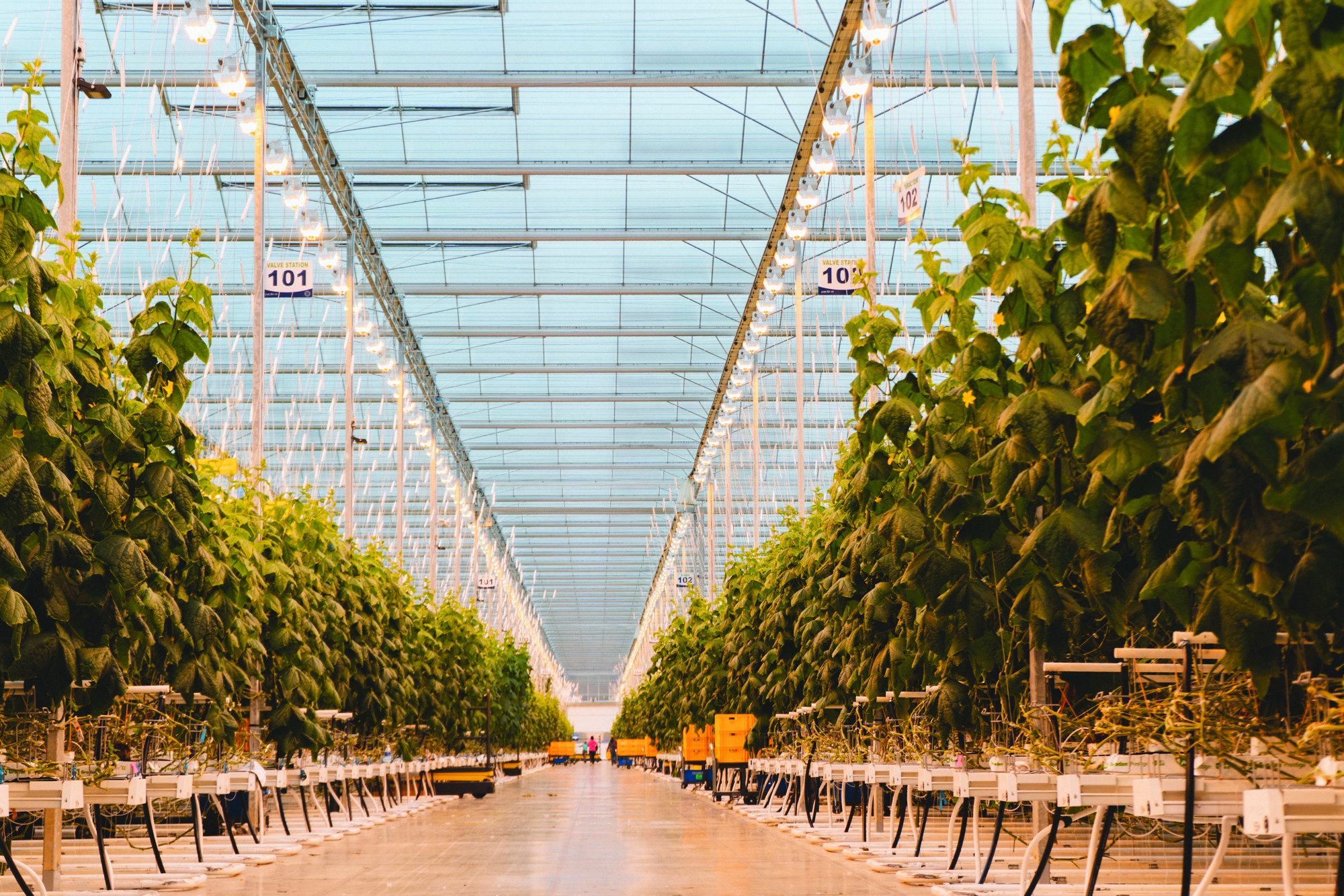 Pure Hothouse Foods greenhouse