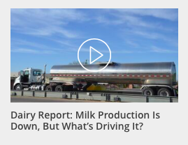 Dairy Report