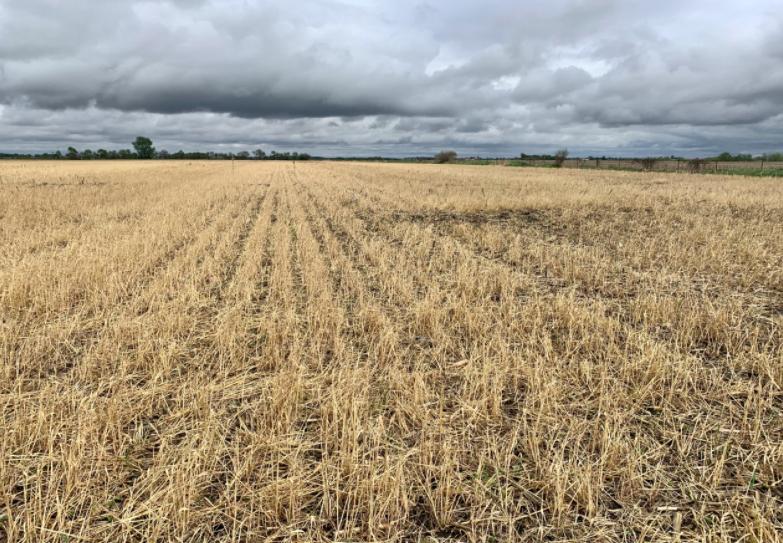 Rob Stout, a farmer in Washington, Iowa, makes cover crops a priority.