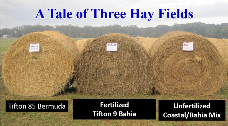 Three-Hay-Fields