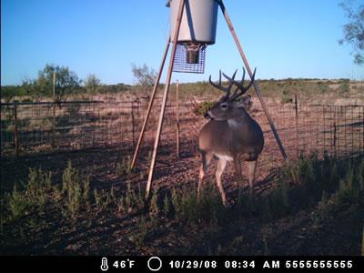 LP_Ranch_Trail_Cam
