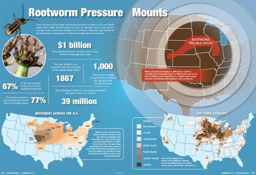 rootworm pressure mounts