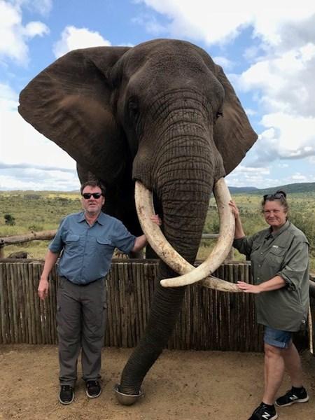 Patty and Paul Elephant