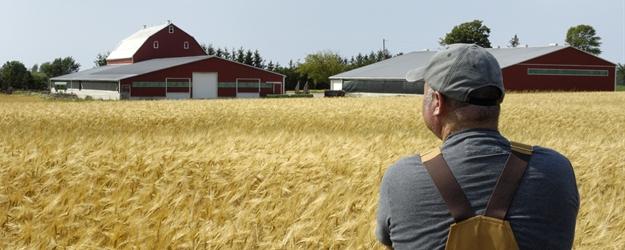 iStock Farmer and Wheat