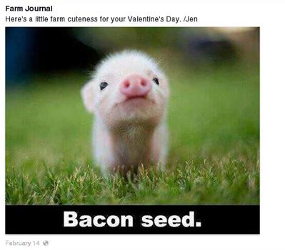 1 Facebook BaconSeed