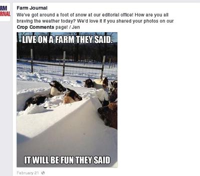 3 Facebook SnowGoats