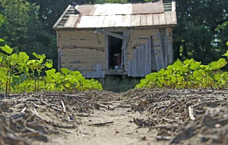 SHARECROPPER_HOUSE_1