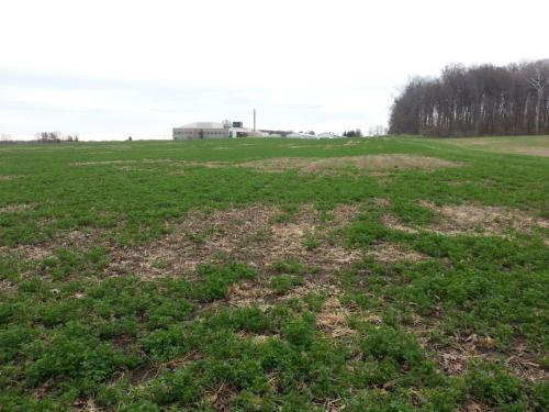 Cassida managing stand losses in alfalfa fields photo2