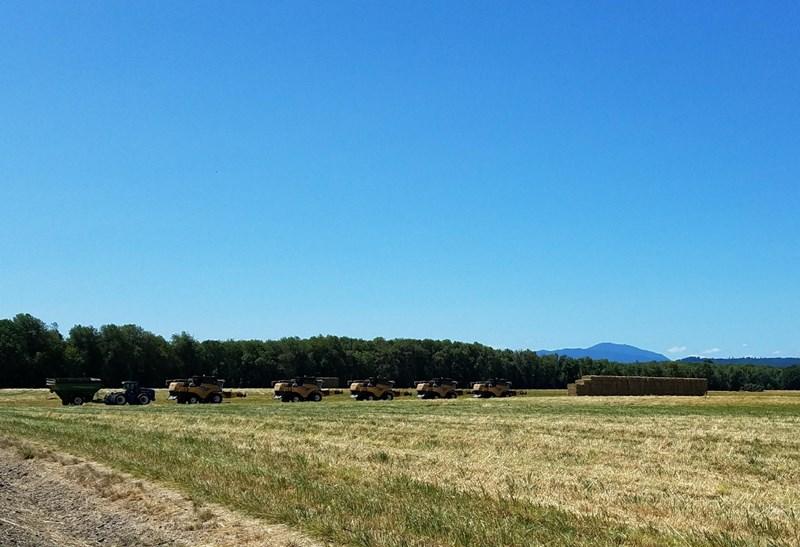 grassseedfield