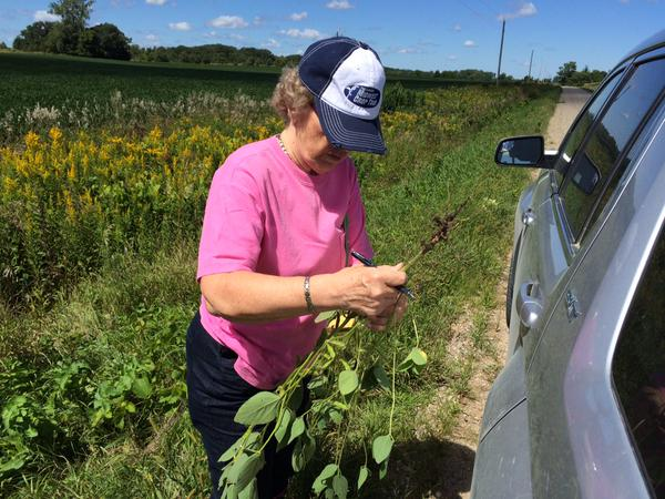 scouting beans