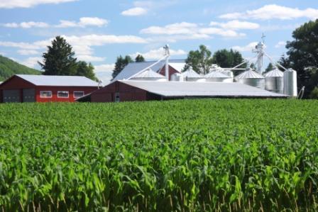Cornfield Farm   iStock Compressed