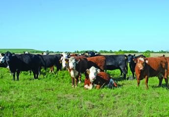 Cull cows represent 20% of a ranch's gross income.