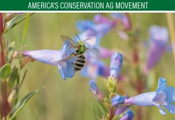 Native bees have relatively simple needs. Their three main requirements for a healthy life are food (wildflowers), shelter (places to nest), and a pesticide-free environment. Some of the very best places for North American native bees to thrive are sustainably managed working lands.