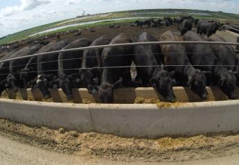 Rising feed costs