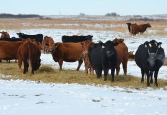 Feed costs are the majority of ranch variable costs.