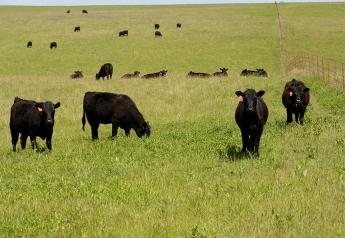 Flint Hills grazing