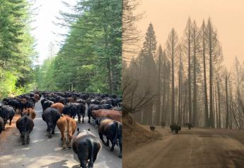 Before and after the Bear Fire