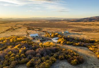 Ranch scene