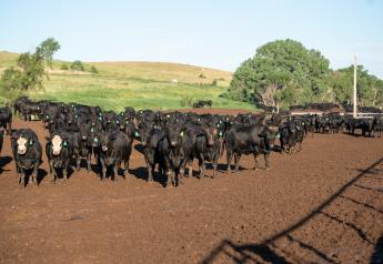 Feedlot placement weight is related to finished weight of fed cattle.
