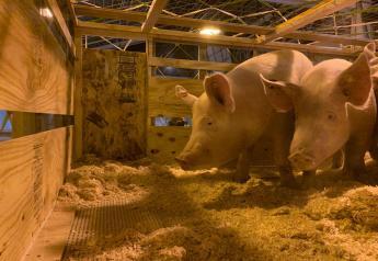 Livestock Cargo Flight of 11-11-2020
