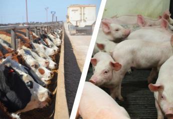 Livestock feeding margins