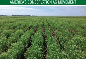 A weed could one day serve as a new beneficial cover crop. Researchers at universities across the Midwest are working to genetically modify pennycress.