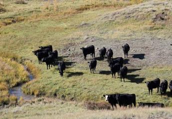 Piedra Valley Ranch