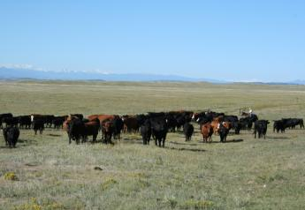 A U.S. District Judge has granted a partial preliminary injunction on Hammond Ranches grazing.