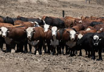 Hereford feedout program requires five head or more.