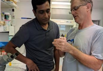 From left, Ram Raghavan, spatial epidemiologist at Kansas State University, and Steve Barker, a leading expert on Australian ticks at the University of Queensland, examine field-collected long-horned ticks in Queensland, Australia.