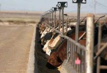 Weaned calves continue to bring a premium at auction.