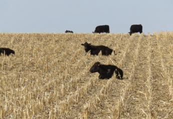University of Nebraska researchers recently conducted a two-year study to evaluate the effects of grazing on subsequent yields and nutrient removal from baling at five locations in Nebraska.